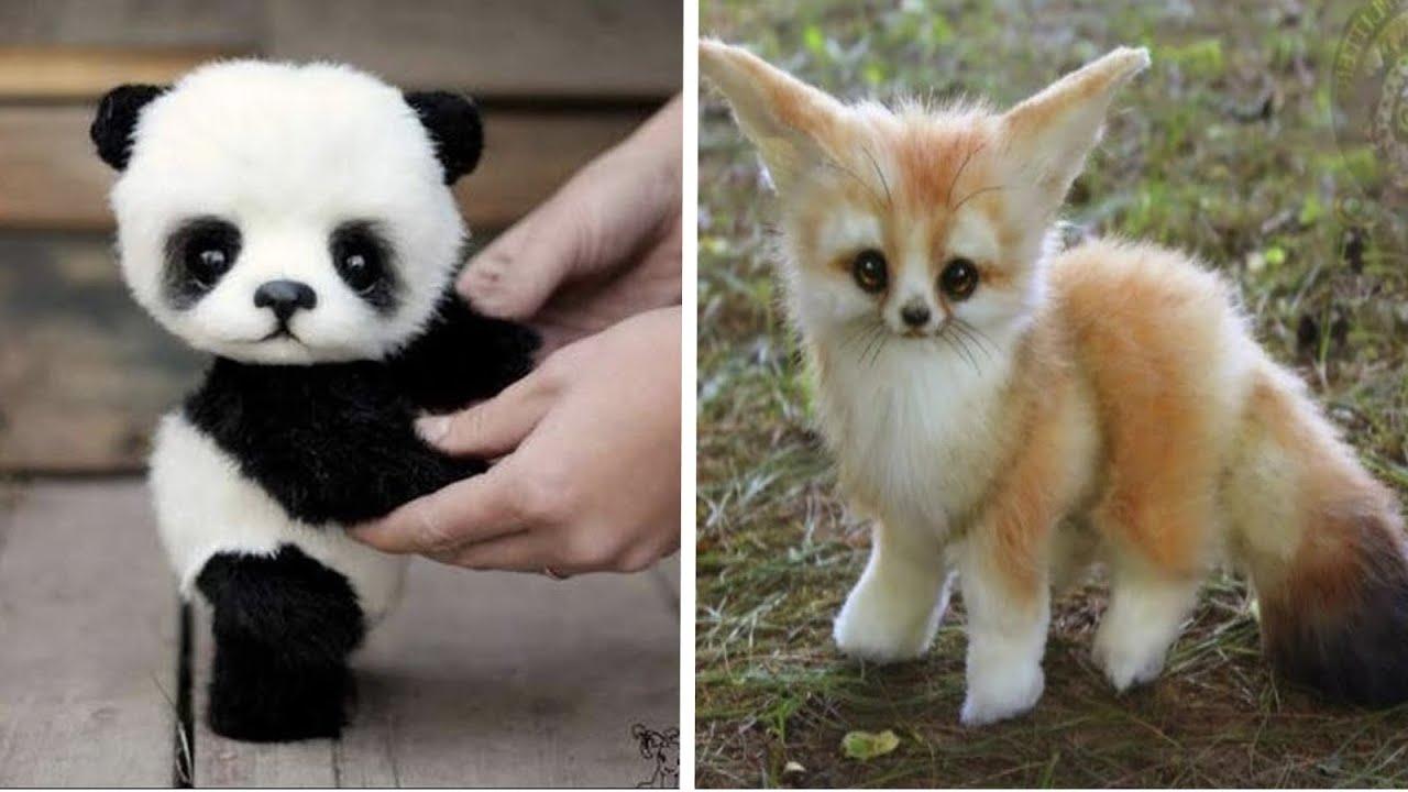 10 สัตว์ตอนเด็กสุดน่ารัก  ที่จะทำให้คุณหัวใจละลาย