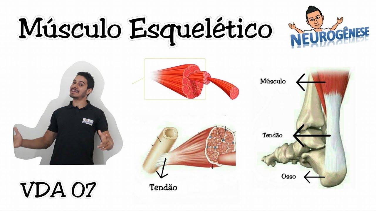 Sistema Muscular - Músculo Estriado Esquelético - Vídeo Aula 07 ...