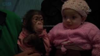 مصر العربية | تركيا.. شمبانزي صغير يجتذب آلاف الزائرين بحديقة حيوانات غازي عنتاب