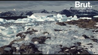 Antarctique : la fonte des glaces s'accélère