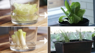 Here is what you'll need! How To Regrow Vegetables From Your Kitchen Potatoes MATERIALS 1 sweet potato 1 yellow potato Toothpicks Mason jar or cups ...