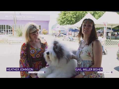 Road to Westminster (RTW): Professional Handler Heather Johnson
