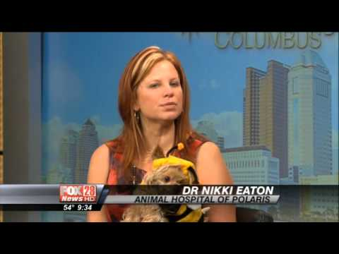 Halloween Costumes for Pets with Dr. Nikki Eaton on Fox 28 ...