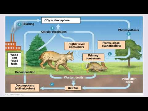 Ecology - Trophic Levels & Nutrient Cycles
