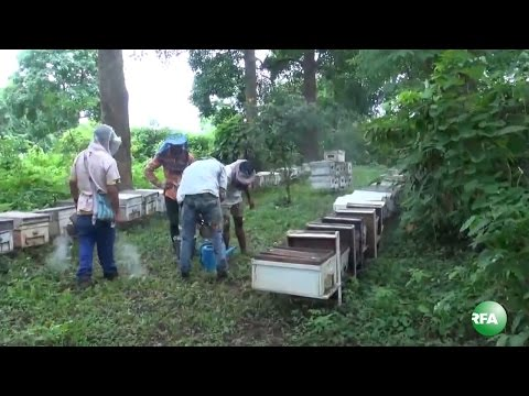 Bee Farmers along Thibaw Kyaukme Lasio Road