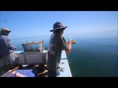 Exmouth Boat Hire & Fishing Charters: Blue Bone Fishing August 2016