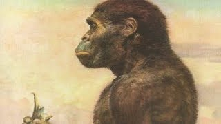 Australopithecus Evolution