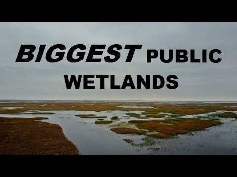 Duck Hunting The LARGEST Public Wetlands In The U.S.!
