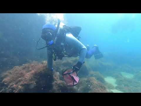 【海洋環境保護】スキューバダイビングで水中をキレイにしちゃおう!
