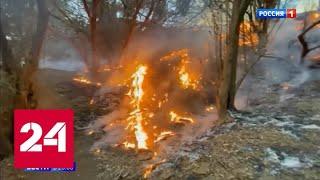 Смотреть видео Дым от лесных пожаров в Австралии достиг Новой Зеландии - Россия 24 онлайн