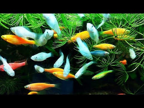 Супер аквариумные рыбки