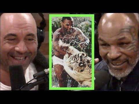 Mike Tyson Explains Why He Got the Tigers | Joe Rogan