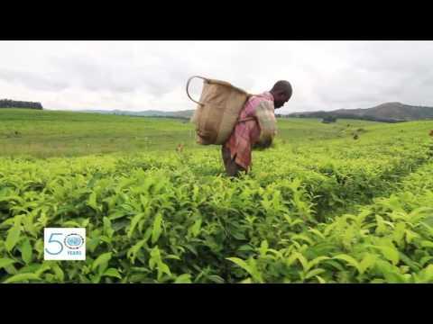 UNIDO supports development of small hydro power plants in Nigeria