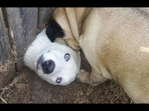 YOU WON'T BE ABLE TO STOP LAUGHING because of these DOGS! Funny and cute DOG compilation