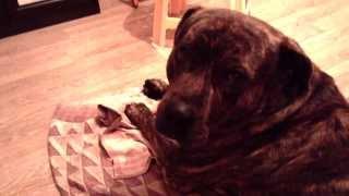 sad dog (грустная собака)(Without feelings of sadness completeness unattainable., 2013-11-25T14:28:32.000Z)