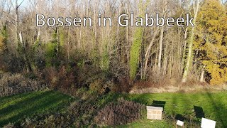 Bossen in Glabbeek