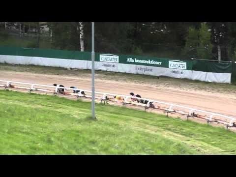 Åkers kanal 30 juni whippet race lopp 8 hundkapp
