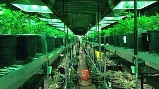 Cannabis als Medizin in Israelischen Altenheim