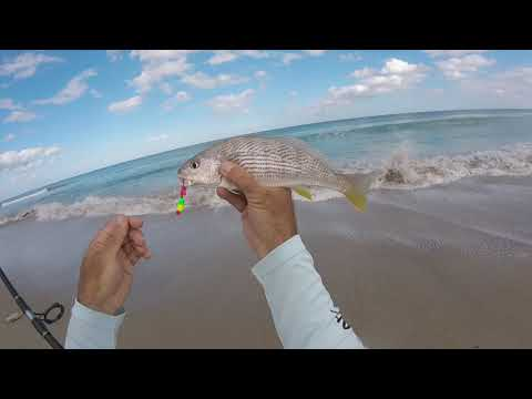 Fish Bites For Whiting And Croakers Review Plus Free Surf Fishing Course