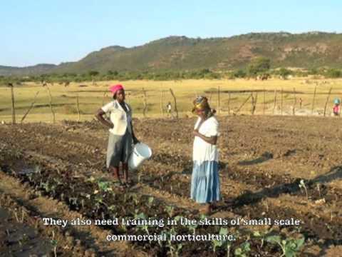 Local food growing in Zimbabwe