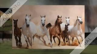 Konie, piękne zwierzęta