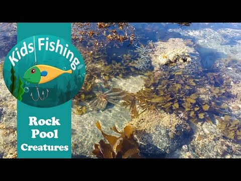Rock Pool Creatures - Kids Fishing