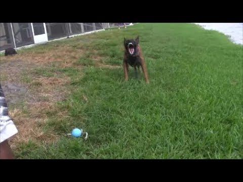 Bark on Command - Advanced exercises