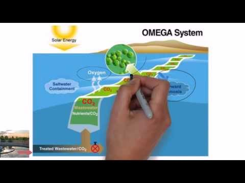 The OMEGA System - BAT Final Project