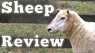 2017 Ovis Aries: Regular Car Reviews