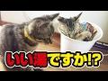 50日目。ボクも入りたいニャー!〜Kitten love narrow place!〜