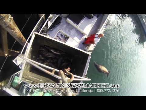Video Buy catfish online