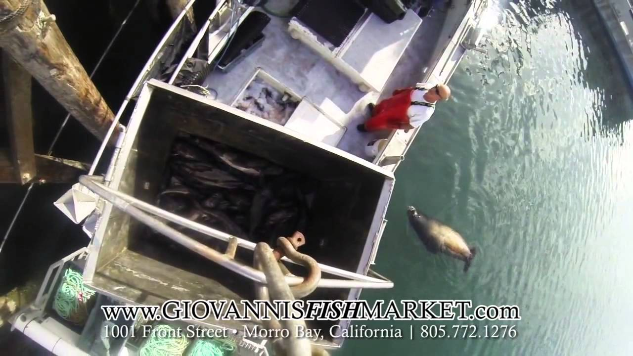 Buy seafood online giovanni 39 s fish market youtube for Giovanni s fish market