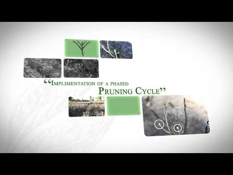 MK Jokai Agri Plantations (P) Ltd. - Corporate Film