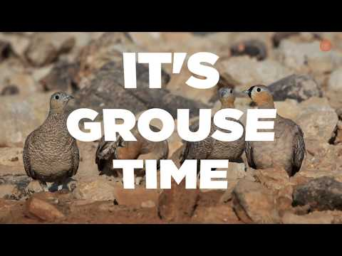 Get Ready: Can You Handle This Grouse Marathon?