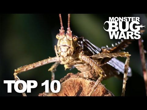 top-10-bug-fights-|-monster-bug-wars