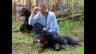Всеросийская выставка собак в Кемерове
