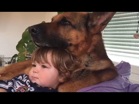 Adorable Babies Showing Love to German Shepherd Dog - Cute Dog and Baby Videos