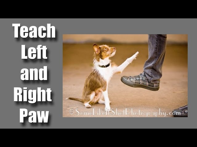 How to teach your dog his left paw from his right paw - clicker dog training