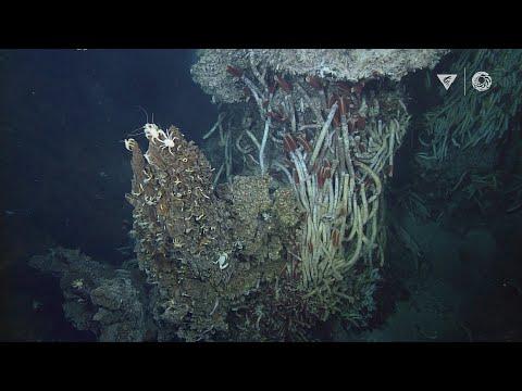 Hydrothermal vents: Explore a bizarre deep ocean habitat