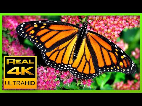The Best Relaxing Garden in 4K - Butterflies, Birds and Flowers🌻🐦 2 hours - 4K UHD Screensaver
