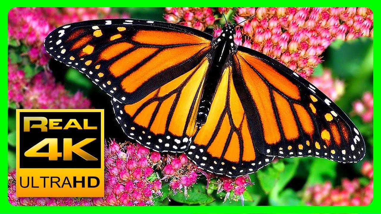 The Best Relaxing Garden in 4K - Butterflies, Birds and Flowers