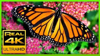 Download The Best Relaxing Garden in 4K - Butterflies, Birds and Flowers🌻🐦 2 hours - 4K UHD Screensaver Mp3 and Videos