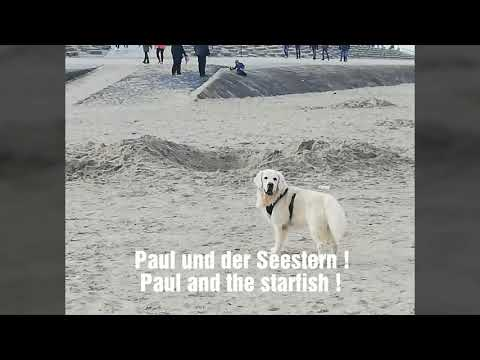 Paul And The Starfish !    ☆    Paul Und Der Seestern !