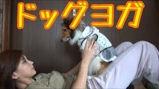 犬と一緒にヨガ風に運動しよう! 犬と触れ合いながら、筋肉も鍛えられる...
