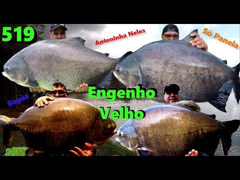 Engenho Velho - Pescaria com Tambas Gigantes na superfície - Fishingtur na TV 519