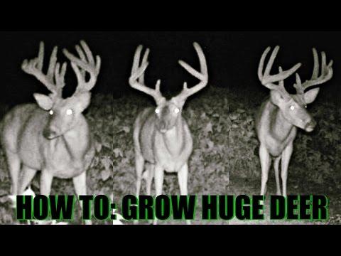 How To: Grow Huge Deer