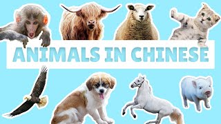 Animal Names with Measure Words in Mandarin | Learn Chinese for Beginners