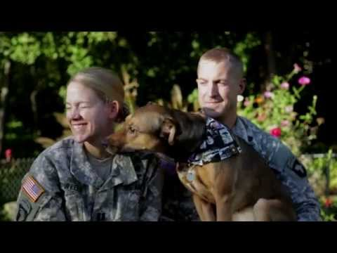 Amazing Dog Reunion with Soldier Owners