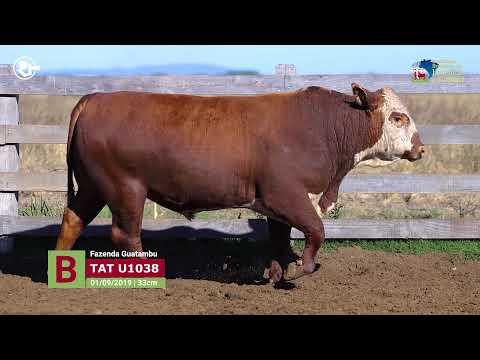 Touro U1038 - Estância Guatambu
