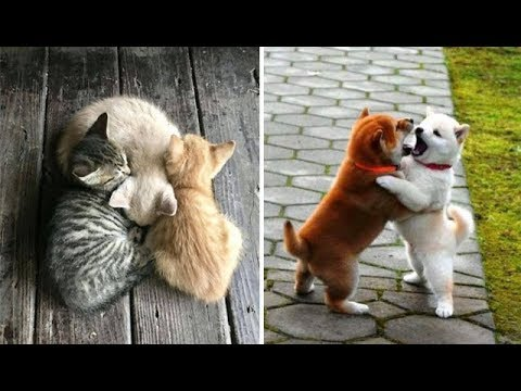 Cute ba animals s Compilation cute moment of the animals  Soo Cute! #40